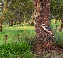 The Blue-winged Kookaburra by Shannon Rogers