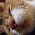 Sleeping Timmy by ANDREW BARKE