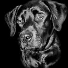 Labrador Portrait by Karen Martin IPA