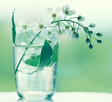 Purity by Alina Uritskaya