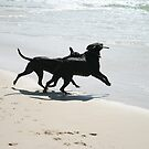 'Two-dogs' Playtime on the Beach by aussiebushstick