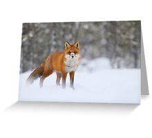 Snow nose Greeting Card