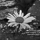 Lone Daisy inspirational card by sarnia2