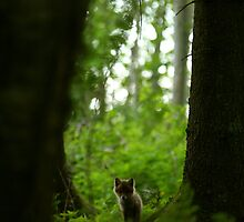 Lonely red fox puppy in forest by Remo Savisaar