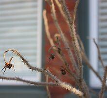 Rosehip in winter by NancyBrigham