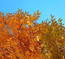 Kewl Leaves by Sjkphotography