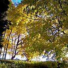 Last of the fall light! by Nancy Richard