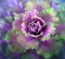 Cabbage Flower by Jessica Jenney