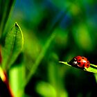 Lady Bug by djnoel