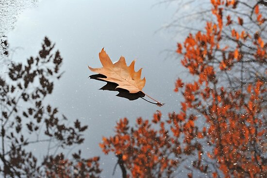 Oak Leaf by Kasia Nowak
