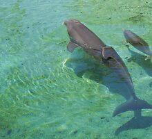 Big Island Dolphin Quest by Melissa Hamblin