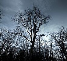 November Tree by Sylvain Dumas