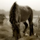 Chincoteague Pony by kimmac