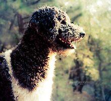 The Family Dog by ibjennyjenny