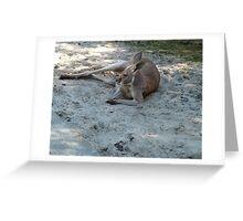 Having A Lazy Afternoon Greeting Card