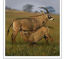 ROAN ANTELOPE (NOT A PHOTOGRAPH OR PHOTOMANIPULATION) by DilettantO
