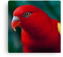 Chattering Lory Canvas Print
