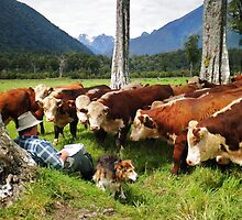 """quality time""   flagstaff hereford stud, nz by rina  thompson"