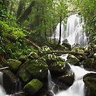 Chalan Falls at Lamington National Park, QLD by Dave Ellem