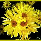 Sunshine Days by Darlene Bayne