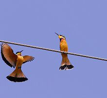 Bee eaters in  Ethiopia by Marieseyes