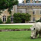 Rhinos on the lawn by Joanne Emery