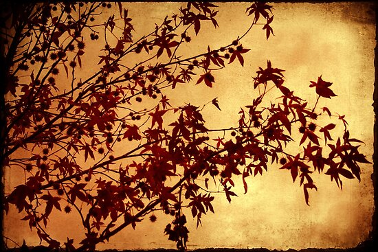 as autumn falls by Ingz