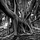 Rainforest Tree by GailD