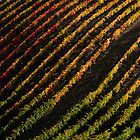 Diagonal vineyards in Douro Valley by João Almeida