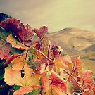 Vines with mountain on the background by Joo Almeida