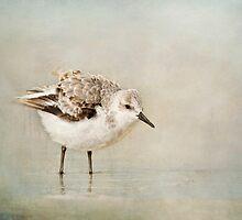 Sanderling by bettywiley