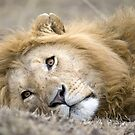 Mara Lion by Sue Earnshaw