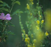 Nootka Rose And Yellow Toadflax by OneRudeDawg