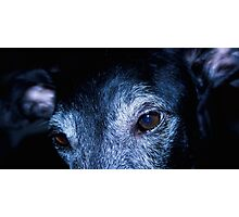 """I got my galgo, and he is the cutest dog in town"" Photographic Print"