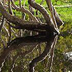 Lake Ainsworth Reflections by Odille Esmonde-Morgan
