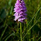 Spotted Orchid, Kilclooney, Donegal by George Row