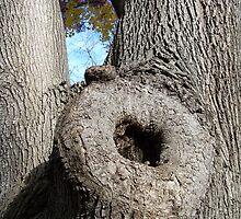Tree porn by Nella Khanis