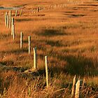 Fenceposts by Debbie  Roberts