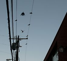 Birds on a Wire #3 by viviangirl