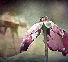 ~ Dreams Past ~ by Lynda Heins