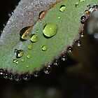 Rain Drops by Karen Checca