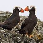 Puffins by noffi