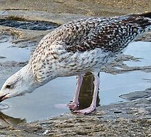 Thirsty After Eating All That Salty Fish by lynn carter