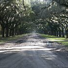 Wormsloe Lane by Allen Gaydos
