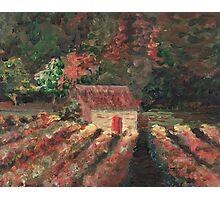 Provence Vineyard Photographic Print