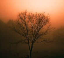 Burning Off the Morning Fog by Rich Frollini