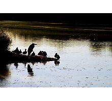 Great Blue Heron at Dusk Photographic Print