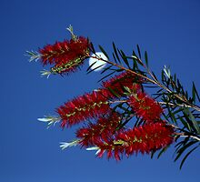 moon light bottle brush by fazza