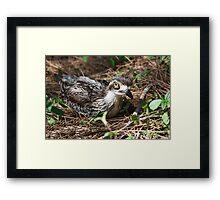 Urban Nesting Framed Print