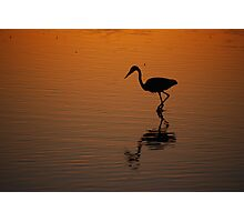 Egret at Sunset Photographic Print